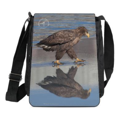 Сумка-планшет Орлан-белохвост