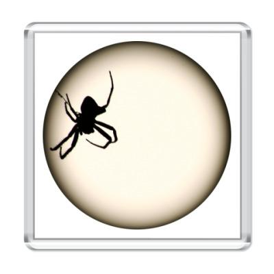 Магнит паук