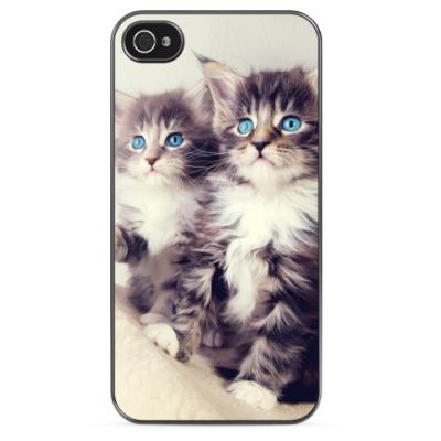 Чехол для iPhone Голубоглазые котята