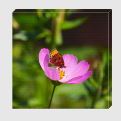 Холст Садовая ромашка