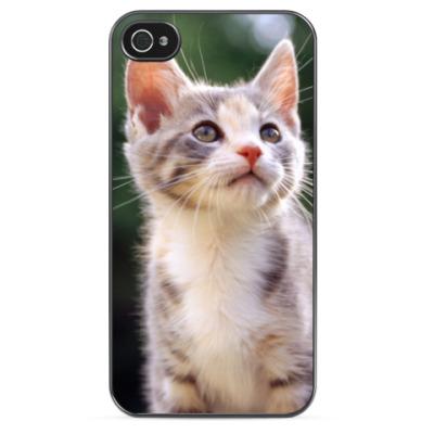 Чехол для iPhone Любопытный котенок