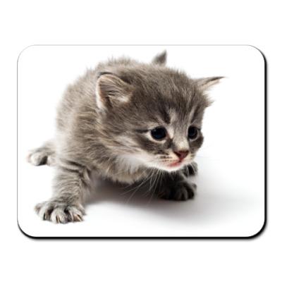 Коврик для мыши Любопытный котенок