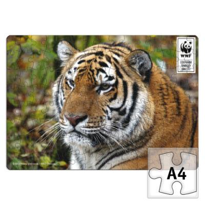 Пазл WWF. А4. Тигр.