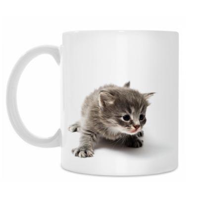 Кружка Любопытный котенок
