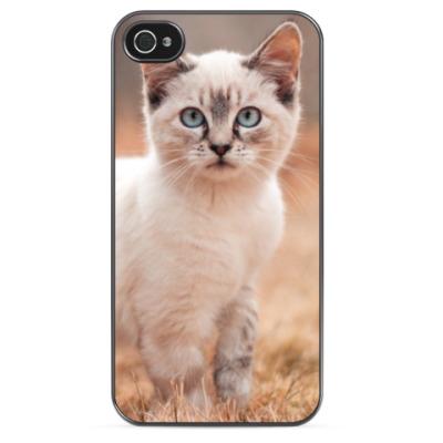 Чехол для iPhone Белый котенок
